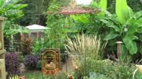 Bill's tropical garden in Ohio - FineGardening