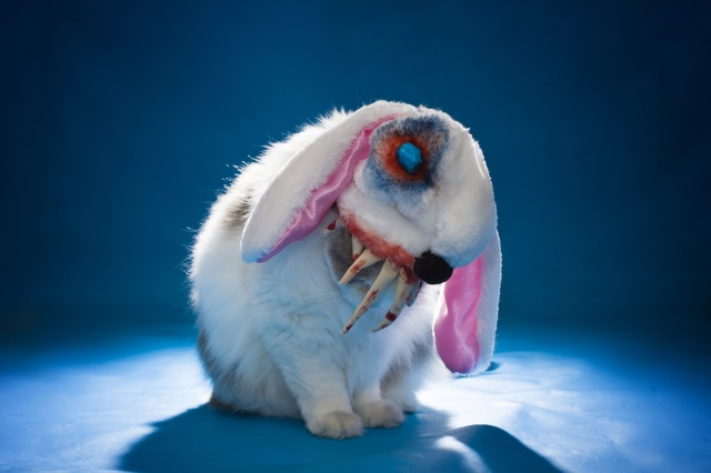 Cute Rabbits Wallpapers Hd Bad Rabbit Ransomware Spreads Across Eastern Europe With