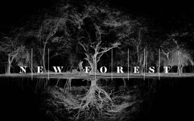 New Forest Film Co Vill Röra Om i Filmindustrin
