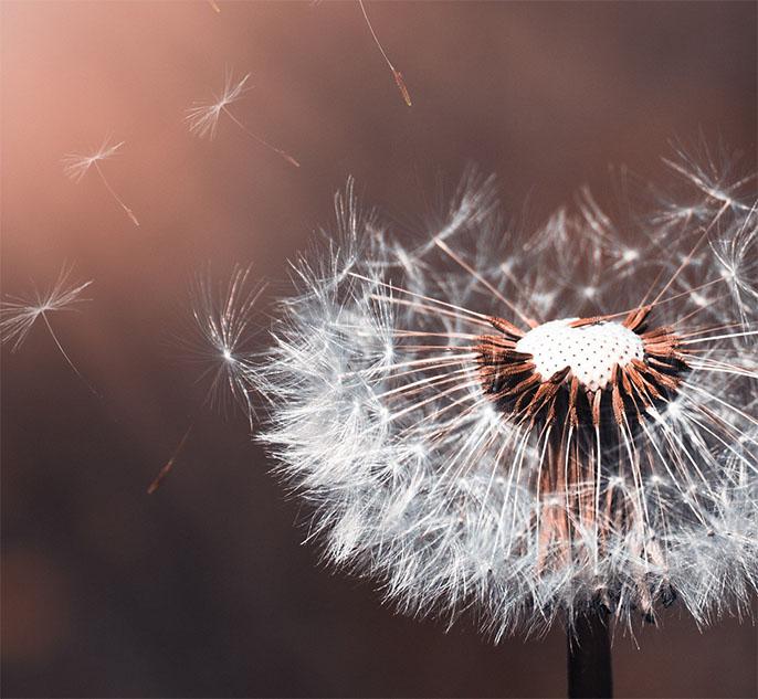 2 geestelijke verzorging voor meer betekenis, vinden van meer zin, samen zoeken naar antwoorden op jouw levensvragen, gelukkiger en voller in het leven staan
