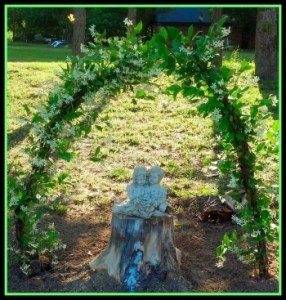 White Jasmine Arch