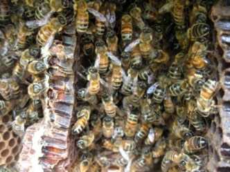Our bees working hard!