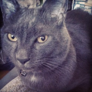 gray cat looking at the calendar