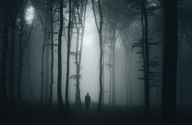 creepy woods in fog