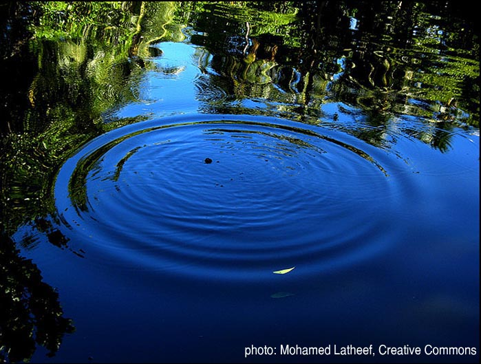 photo: Mohamed Latheef, Creative Commons