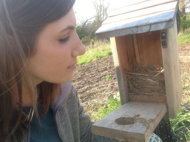 Monitoring is very important for bluebirds 4/28