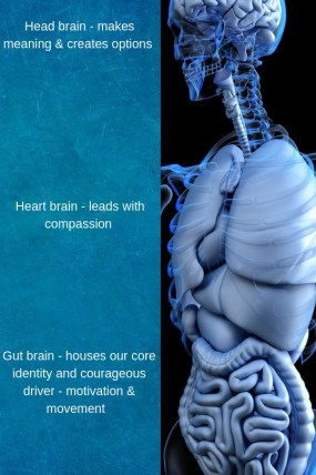 mbraining, multiple braining, head, heart, gut, compassion, creativity,. options, identity, fear, motivation, movement, courage