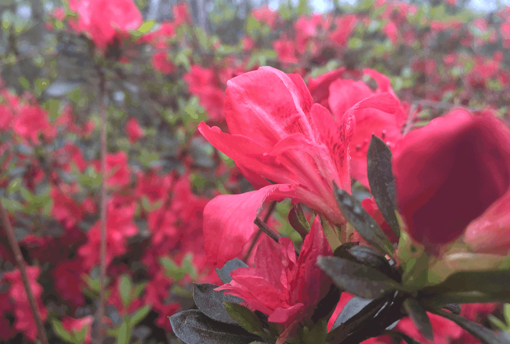 Small Business Growth: 5 Lessons from Azalea Pruning