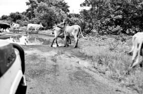 Some roadblocks