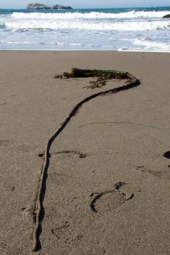 Northern California beaches, California beaches