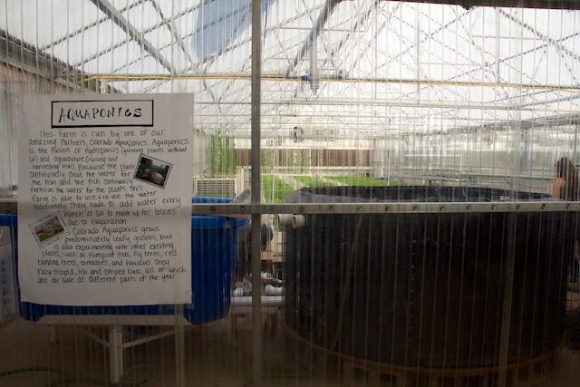 Growhaus Colorado Aquaponics farm Dec 2014