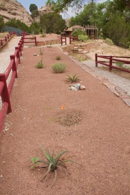 Xeriscape at Navajo Nation Zoo, 2013