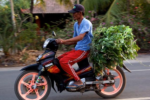 Ojek man with greens oct 2015