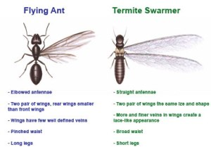 How To Know If You Have Termites  Green Side Up