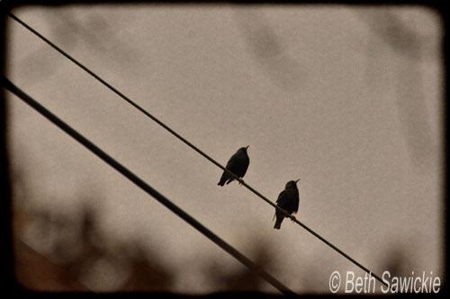 """Image by Beth Sawickie www.BethSawickie.com """"Birds On A Wire"""""""