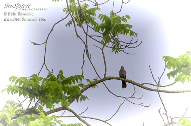 Bird in a Tree by Beth Sawickie http://bethsawickie.com/bird-in-a-tree