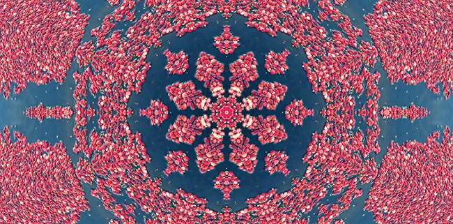Mandala of Cranberries by Beth Sawickie http://bethsawickie.com/mandala-of-cranberries