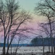 """Image by Beth Sawickie www.BethSawickie.com/winter-cranberry-bog-1 """"Winter Cranberry Bog #1"""""""