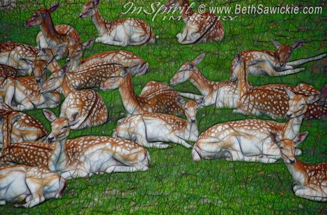Fallow Deer Resting http://www.bethsawickie.com/fallow-deer-resting