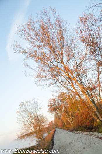 Tree along path at sunrise by Beth Sawickie http://bethsawickie.com