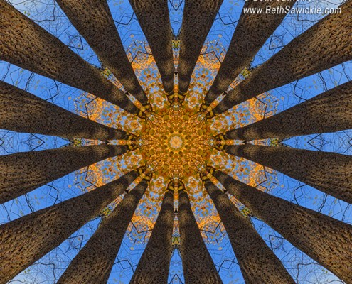 Looking Up Mandala 1 by Beth Sawickie http://www.BethSawickie.com/looking-up-mandala-1