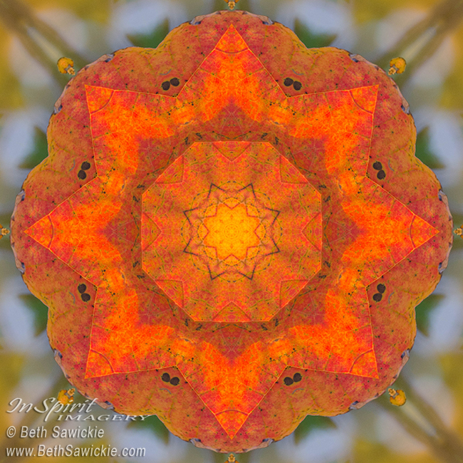 Maple Mandala by Beth Sawickie http://bethsawickie.com/maple-mandala