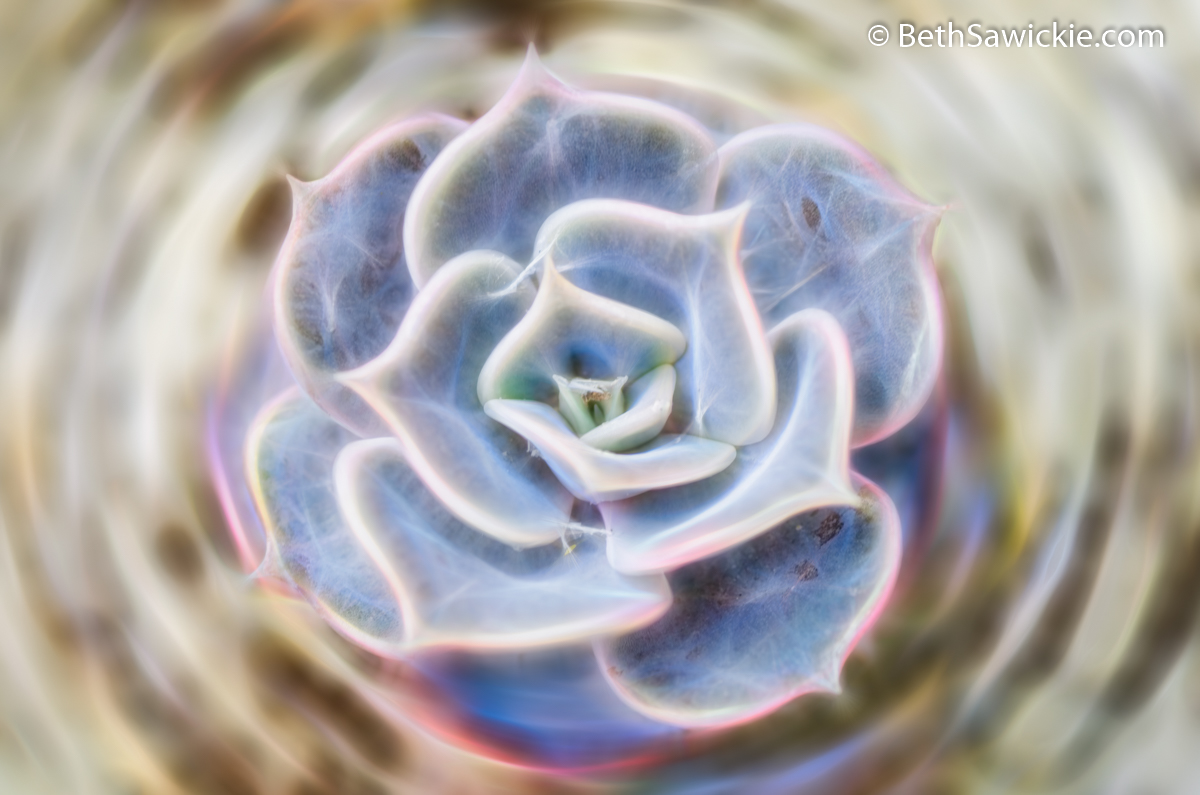 Succulent Glow by Beth Sawickie