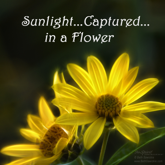 "Image by Beth Sawickie. www.BethSawickie.com/sunlight-captured-in-a-flower  ""Sunlight Captured in a Flower"""