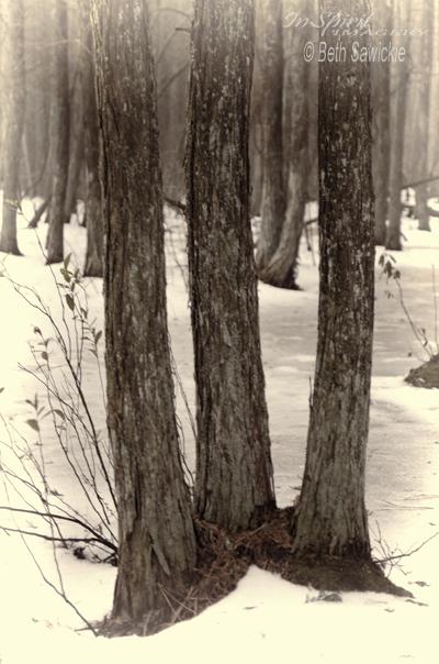 "Image by Beth Sawickie - http://www.bethsawickie.com/tree-amigos ""Tree Amigos"""