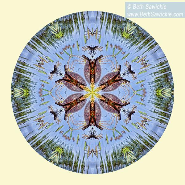 Red Bellied Turtle Mandala by Beth Sawickie http://www.bethsawickie.com/red-bellied-turtle-mandala