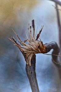 """Image by Beth Sawickie www.BethSawickie.com """"Twisted and Splintered"""""""