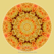 Yellow Orange Mum Mandala by Beth Sawickie http://bethsawickie.com/yellow-orange-mum-mandala