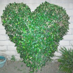 The Heart Bush