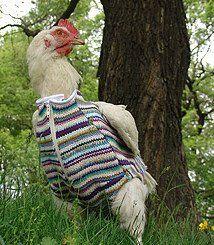 chicken vest