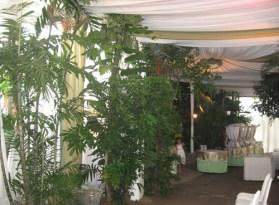 Pohon+tanaman hias sebagai dekorasi di dalam tenda