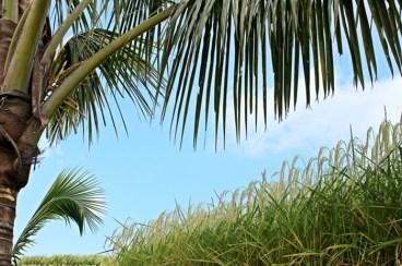 - Rice Terrace, Jatiluwih, Bali _