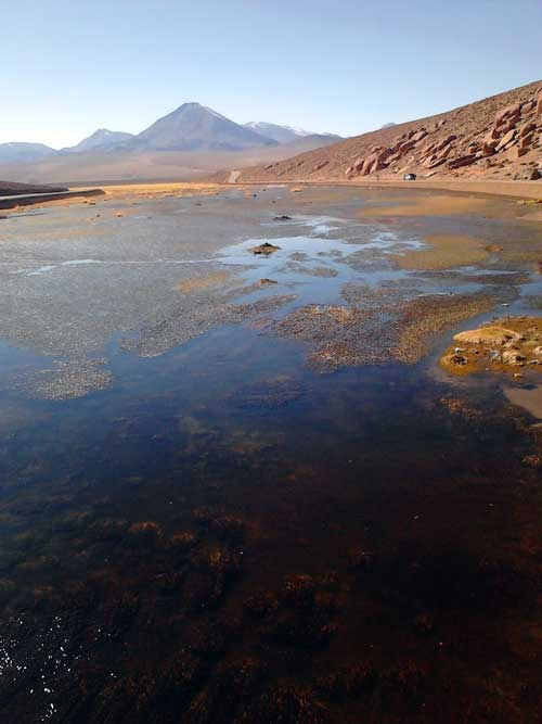 O verdadeiro oásis no meio do deserto. Ao fundo, o Licancabur