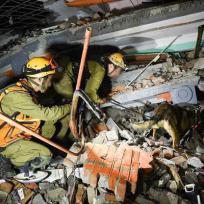 30/04/2015 - Equipes de resgate continuam busca por sobreviventes no Nepal. Foto IDF