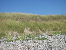 Dune covered with marram grass