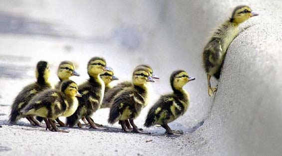https://i0.wp.com/betsydevine.com/blog/pictures/DucklingsSnow.jpg