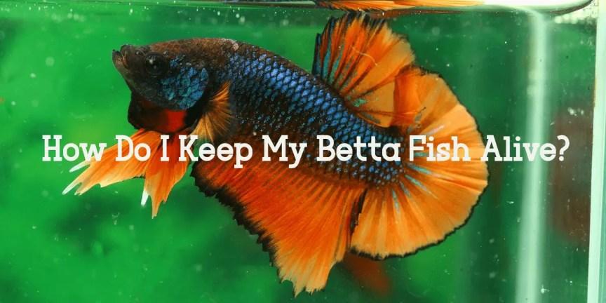 Do I Keep My Betta Fish Alive