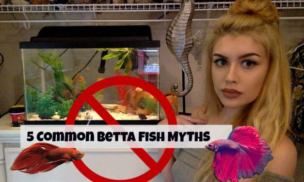 5 Things That Are Not True About Betta Fish!