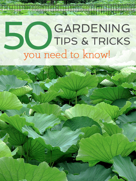 50 Gardening Tips And Tricks With Garden Collage  Better
