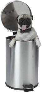 dog in trashcan