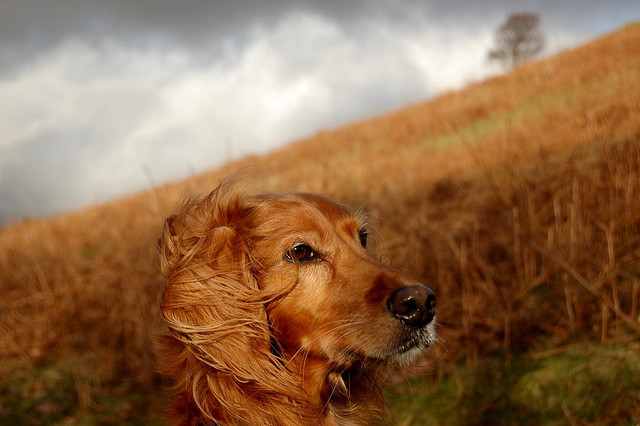 beautiful dog pictures