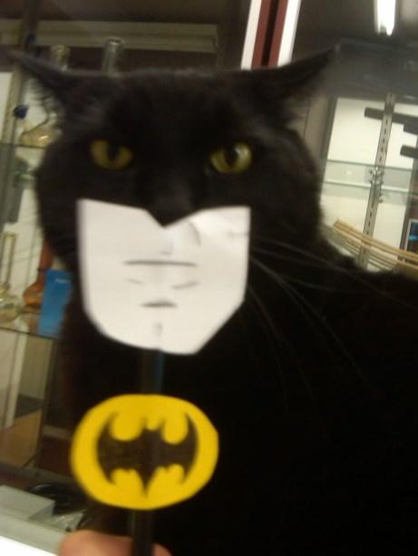 funny batcat pic