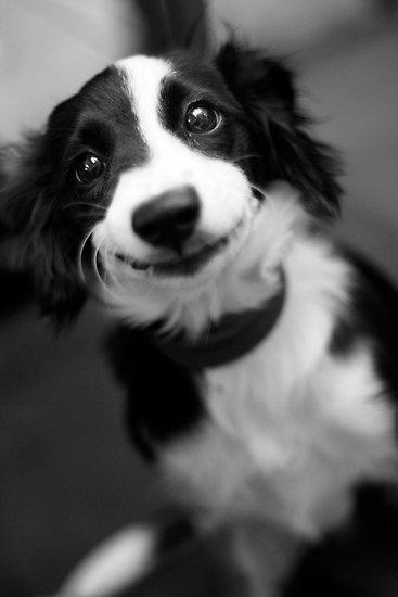 smiling dog photo