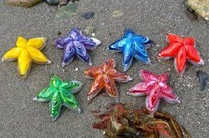 Royal-Starfish-500x332