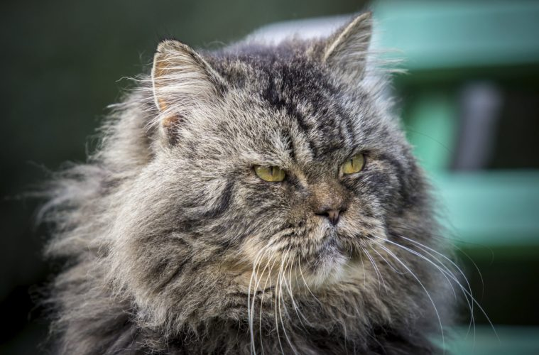 61eda49e7b5f What To Do When The Cat Won t Die - Better After 50