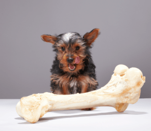 dog with oversized bone